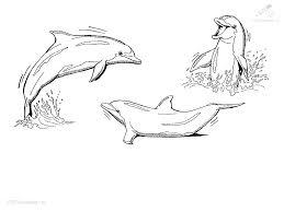 dolfijn24