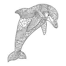 dolfijn35