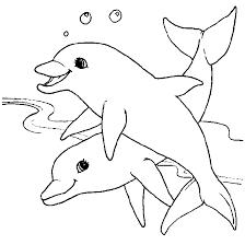 dolfijn4