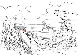 dolfijn40