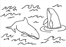 dolfijn50