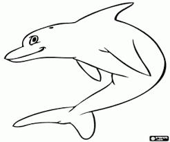 dolfijn56