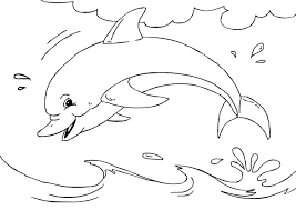dolfijn6