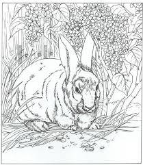 konijn10