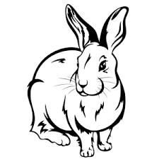 konijn3